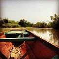 Idag fågelskådning i mangroveträsk... I övermorgon hämtning på skolan. Sköna kontraster i livet just nu. -gambia (8179725036).jpg