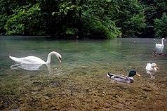 Ilidza Vrelo-Bosne 2010-07-05 (12).jpg
