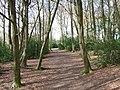 In Bray's Wood - geograph.org.uk - 150395.jpg
