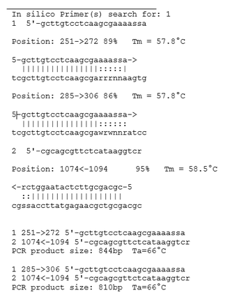 In silico PCR - In silico PCR example result with jPCR software.