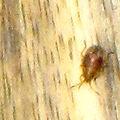 Insecte0554.jpg