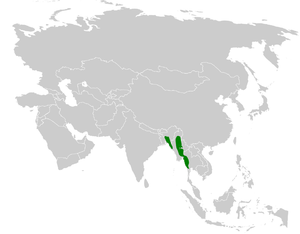 Olive bulbul - Image: Iole virescens distribution map