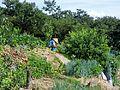 Ipbuk-dong Farming - 2012-07-25.JPG