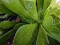 "Iran-qom-Cactus-The greenhouse of the thorn world گلخانه کاکتوس ""دنیای خار"" در روستای مبارک آباد قم- ایران 15.jpg"