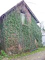 Ivy covered barn, Chettle - geograph.org.uk - 1019973.jpg