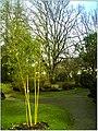 January Frost Botanic Garden Freiburg Bamboo - Master Botany Photography 2014 - panoramio (2).jpg