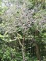Jardim Santa Rosa, Itatiba - SP, Brazil - panoramio (5).jpg