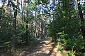 Jesienny spacer - panoramio (3).jpg
