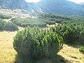 Jnepeniş - panoramio.jpg