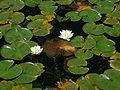Juanita Bay - lily pads.jpg