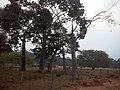 Juara - State of Mato Grosso, Brazil - panoramio - LUIS BELO (33).jpg
