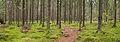 Kangasvuori nature trail - panorama 3.jpg
