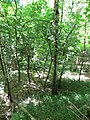 Kaniv Nature Reserve (May 2018) 58.jpg