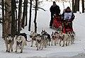 Karen Ramstead's team of Huskies near Goose Lake (4429509299).jpg