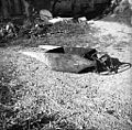 Karjola za gnoj vozit iz štale na gnojišče, Loka 1958.jpg