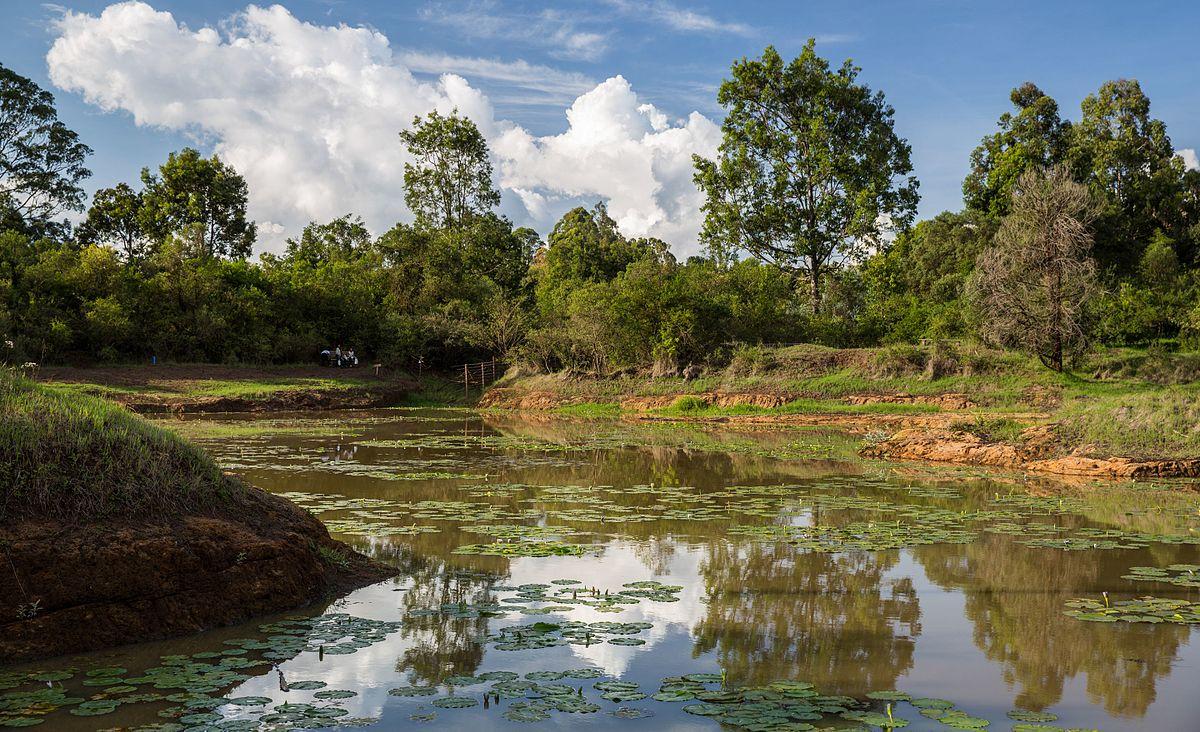 Karura Forest - Wikipe...