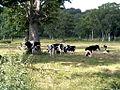 Kayano-Daira Pasture - panoramio.jpg
