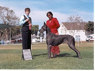 Conformation show - Winning dogs are awarded prizes by the judge.