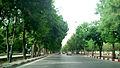 Kemanshah Shiroudi BLV.jpg