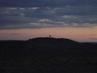 Dalanzadgad - A Khulan (Mongolian Wild Ass) on a hill in the Gobi, near Dalanzadgad, Mongolia at sunset.