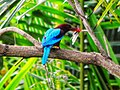 Kingfisher on the hunt.jpg