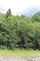 Klöntalersee - panoramio (21).jpg