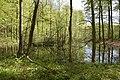 Kleiner Schwarzer See im Buchenwald Grumsin.JPG