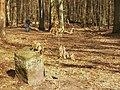 Koenigswald - Wegweiser (Waymarker) - geo.hlipp.de - 34714.jpg