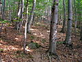Kokosovce11Slovakia16.jpg