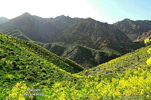 Ferula - Ferula Iran
