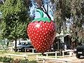 KoonoomooBigStrawberry.JPG