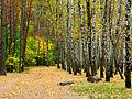 Kyiv Sovky Park11.JPG