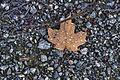 L'automne au Québec (8072412684).jpg