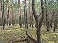 Līksna Parish, LV-5456, Latvia - panoramio - alinco fan (3).jpg