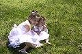 LE - Easter Egg Hunt (5783973390).jpg