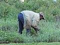 Labourer at work, Kigali.jpg