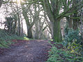 Ladies Walk, Andover. Winter. - geograph.org.uk - 90394.jpg