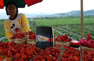 La Trinidad, Benguet - A strawberry vendor in La Trinidad