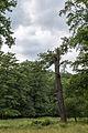 Lainzer Tiergarten Auhofer kleine Stockwiese 1.jpg