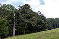 Lainzer Tiergarten Auhofer kleine Stockwiese 2.jpg