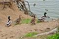 Lake Merced Park - March 2018 (3077).jpg