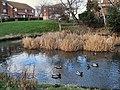 Lake Park Pond - geograph.org.uk - 1637790.jpg