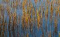 Lakeside (3983923365).jpg