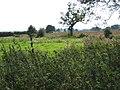 Land near Lacon Hall - geograph.org.uk - 554543.jpg