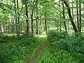 Landschaftsschutzgebiet Horstmanns Holz Melle -Waldanfang- Datei 7.jpg