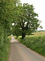 Lane to Hartpury - geograph.org.uk - 1336160.jpg