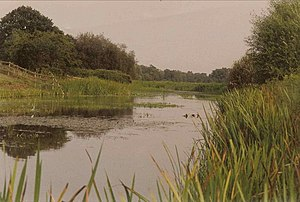 Langham Pond - Langham Pond, Runnymede