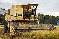 Langkawi Malaysia Rice-Harvesting-07.jpg