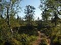 Lapland - Urho Kekkonen National Park - 20180728171824.jpg