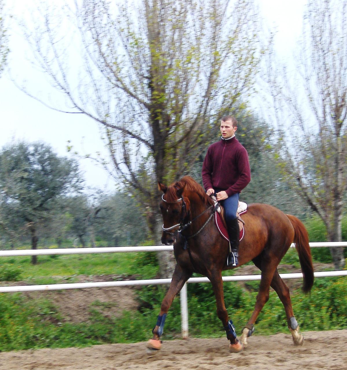 Arabian Horse Images Sardinian Anglo-Arab -...